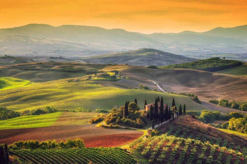 Weinberge - Bianco Berlin – Food & Wine Made in Italy