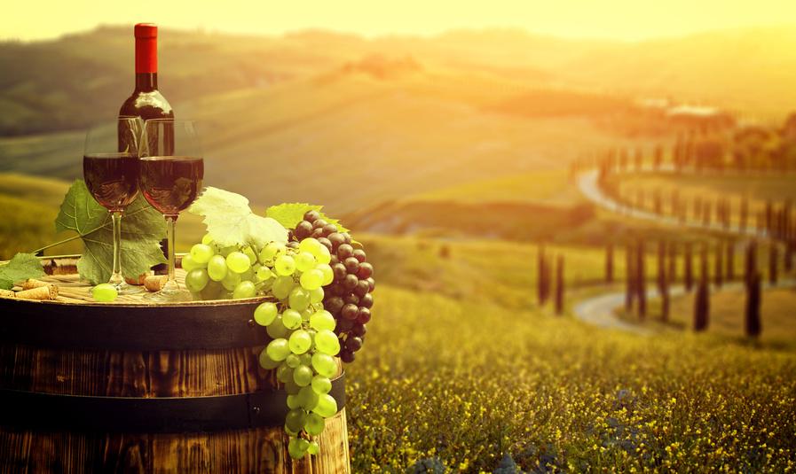 Weinberg mit Wein und Trauben - Bianco Berlin – Food & Wine Made in Italy